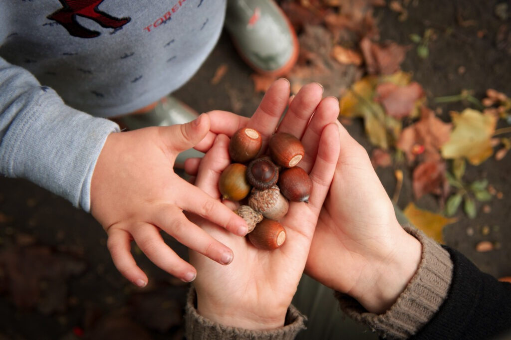 Close-up of acorns in mom's hands and small boy touching them: outdoor winter activities that don't require snow