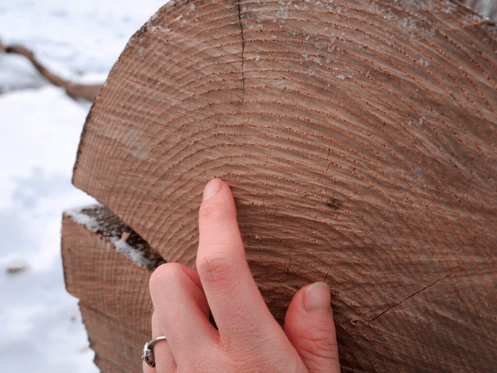 close up of tree stump rings with finger counting them