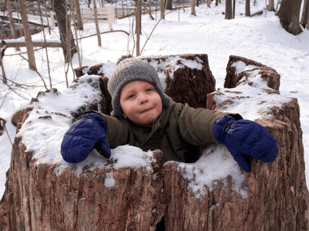 little boy learning about tree rings inside of really large hollowed out tree stump