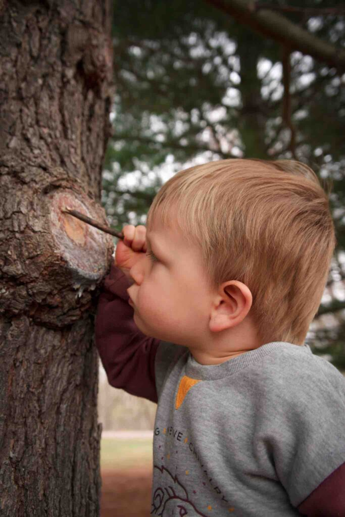 While hiking with toddler, small boy pokes at tree sap while studying it closely.
