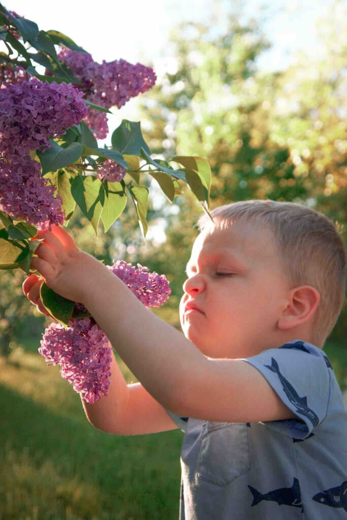 Toddler boy stops to smell lilac flowers while hiking.