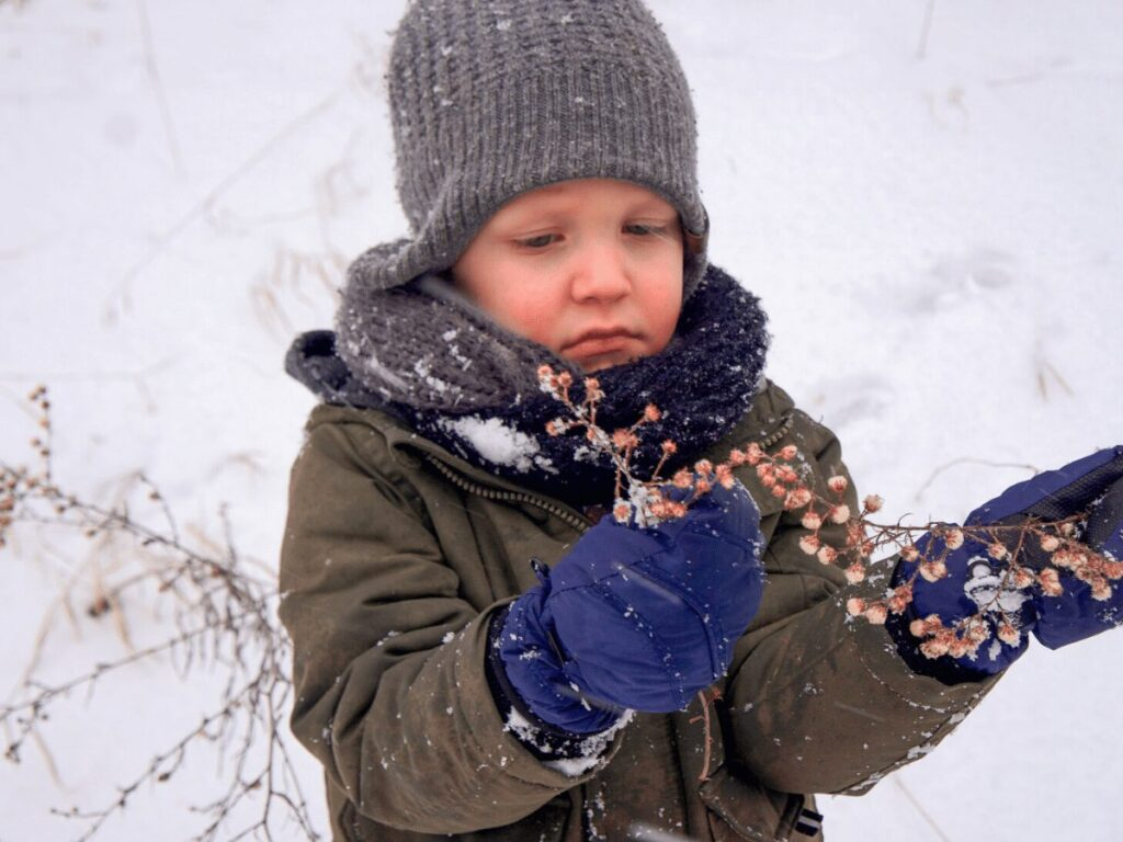 Small boy in the snow looks at dried flower stalk while on a nature scavenger hunt.