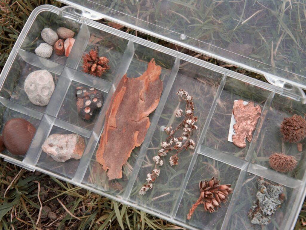 Compartment tray with nature finds from kid's nature explorer kit.