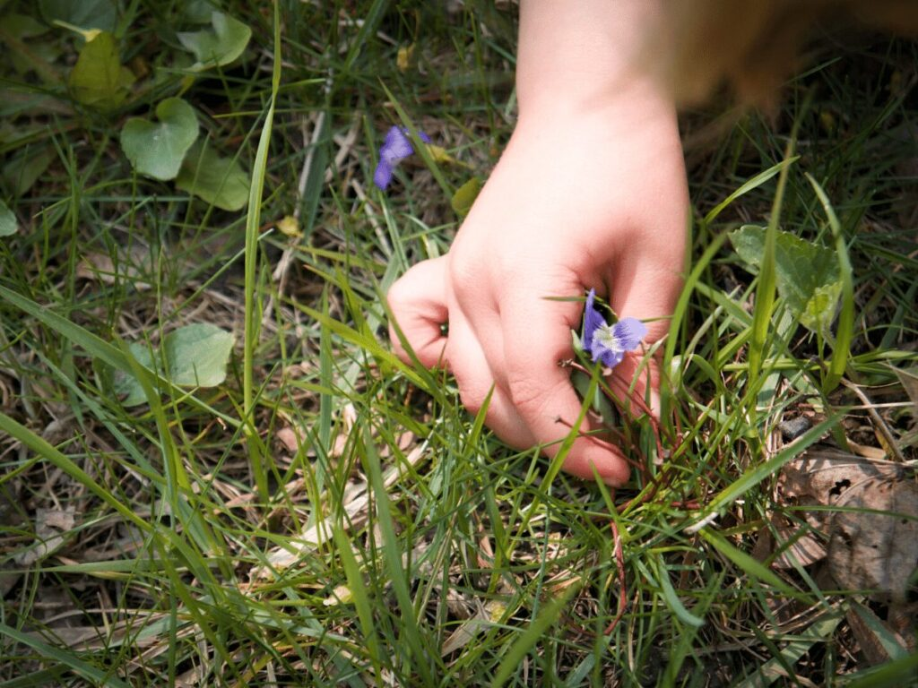 Close up of small boy's hand picking purple flower for a nature rainbow craft.