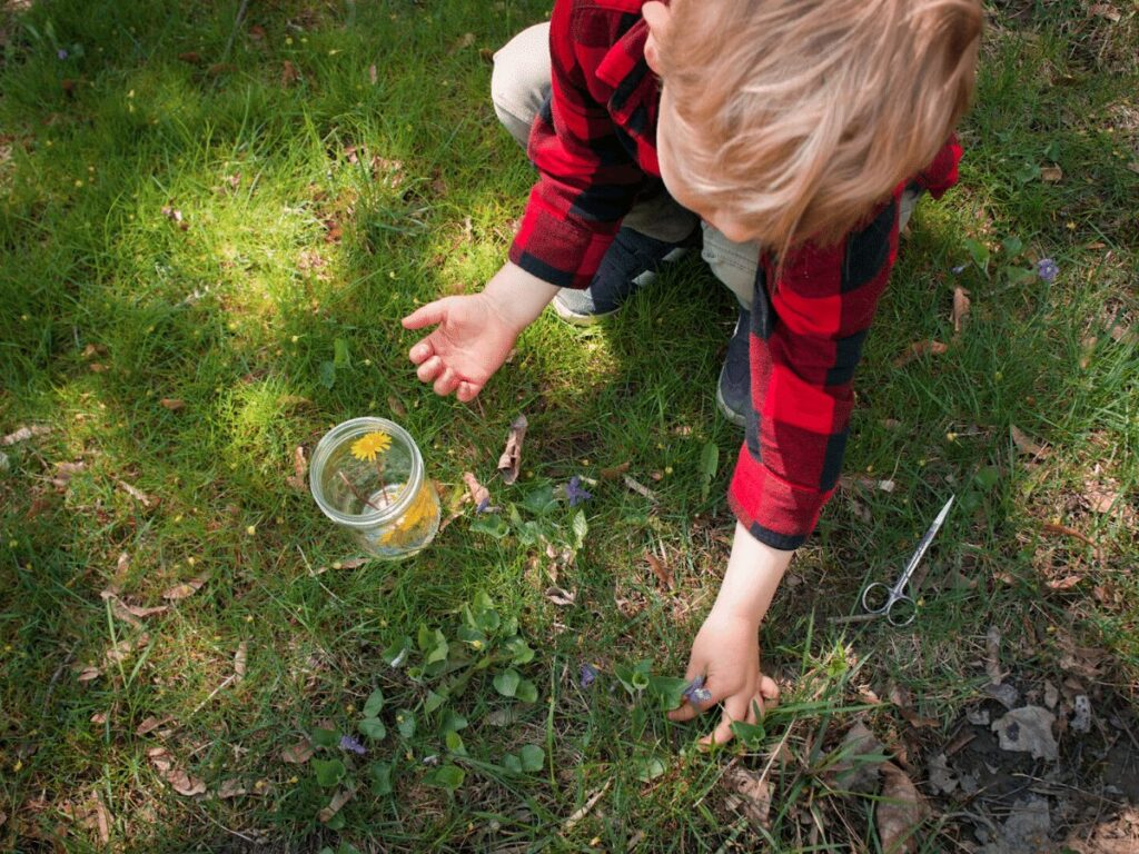Small boy picks purple flower from yard for a rainbow craft.