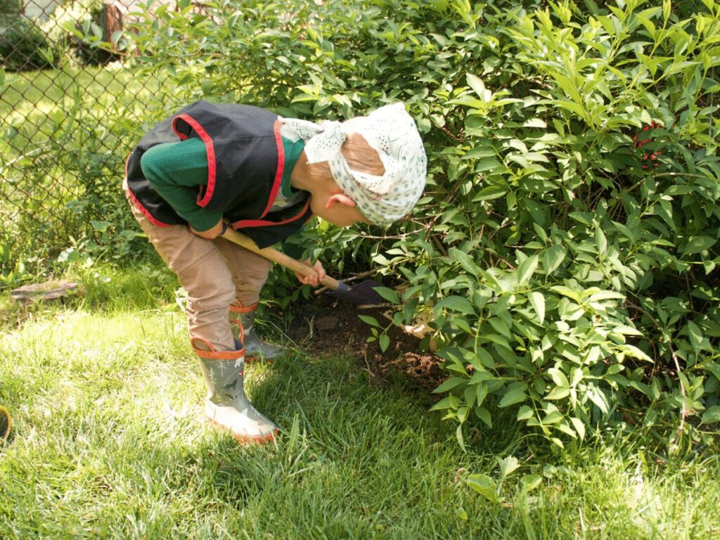 small boy digging under a bush as part of treasure hunt