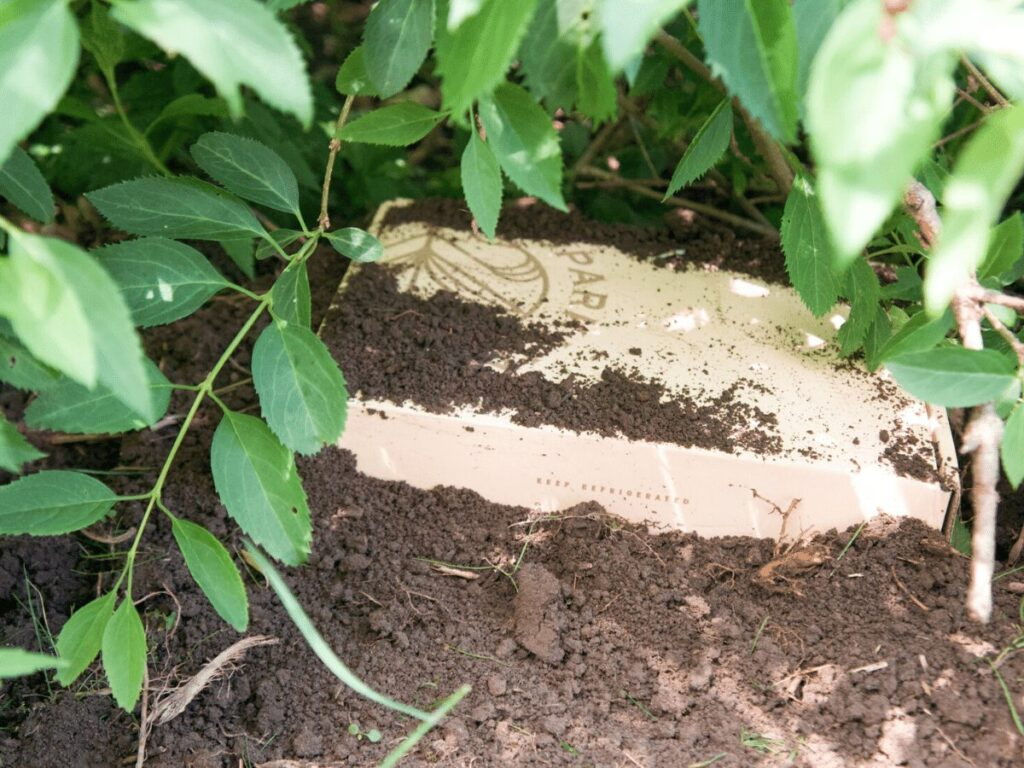 top of box poking out of dirt underneath bush as part of treasure hunt