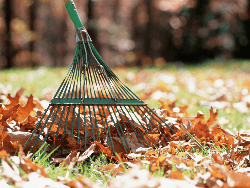 close up of rake and leaves- business ideas for kids