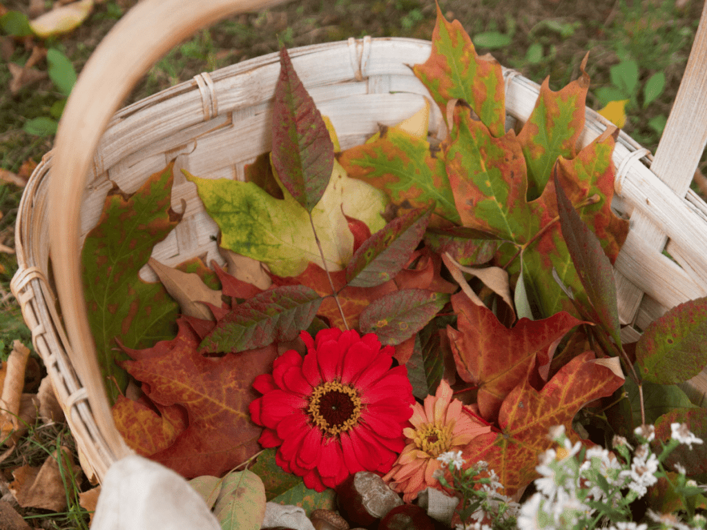 fall bucket list, basket filled with colorful leaves and other autumn nature finds from scavenger hunt