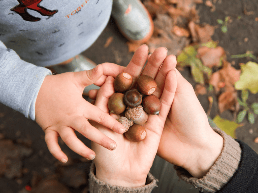 fall bucket list, close-up of hands holding acorns