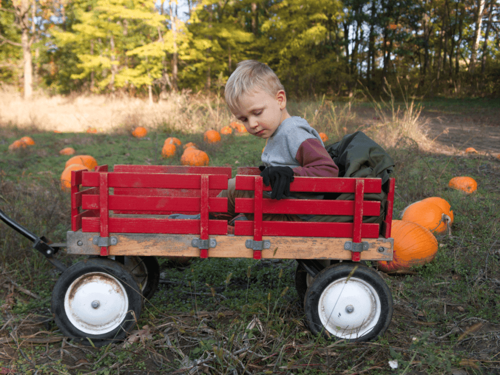 fall bucket list, small boy sitting in wagon in the middle of pumpkin patch