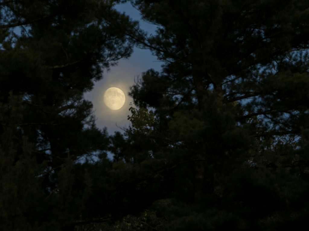 close up of moon through the trees, outdoor halloween activities