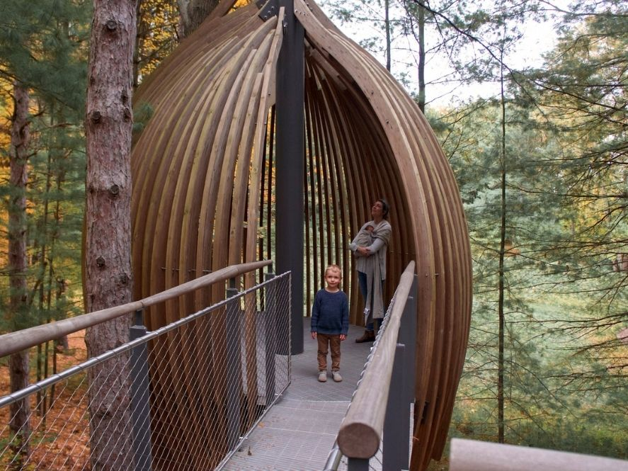 wood pods at dow gardens canopy walk