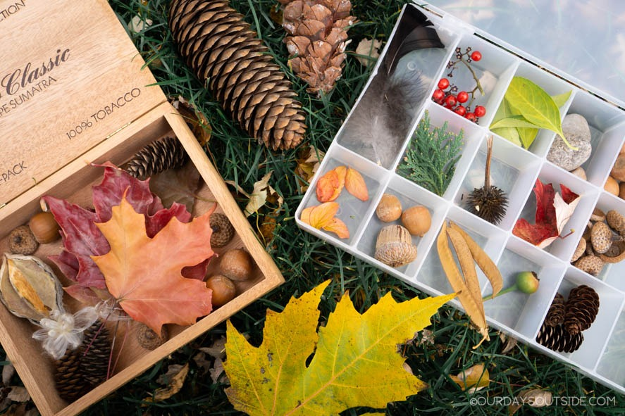 fall nature display including leaves, acorns, and pine cones
