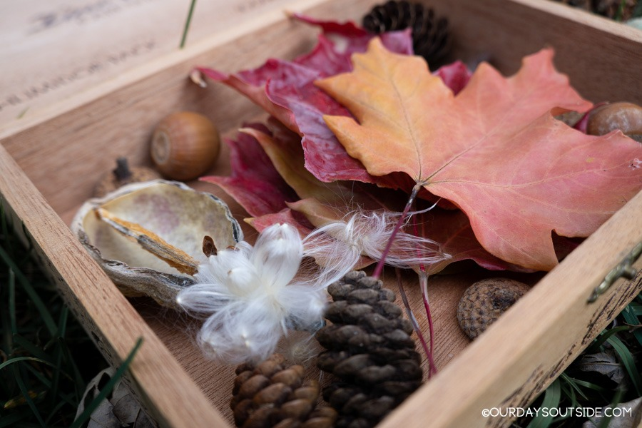 close up of box filled with nature finds