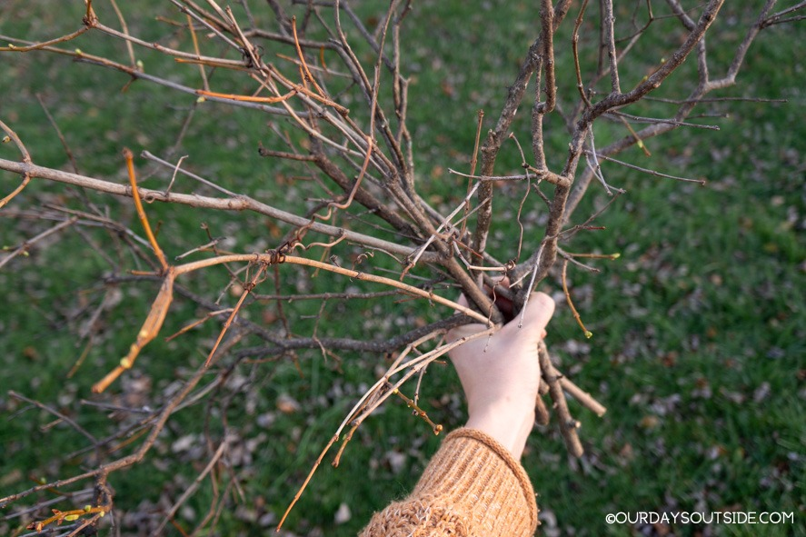 hand holding cluster of sticks for thanksgiving craft