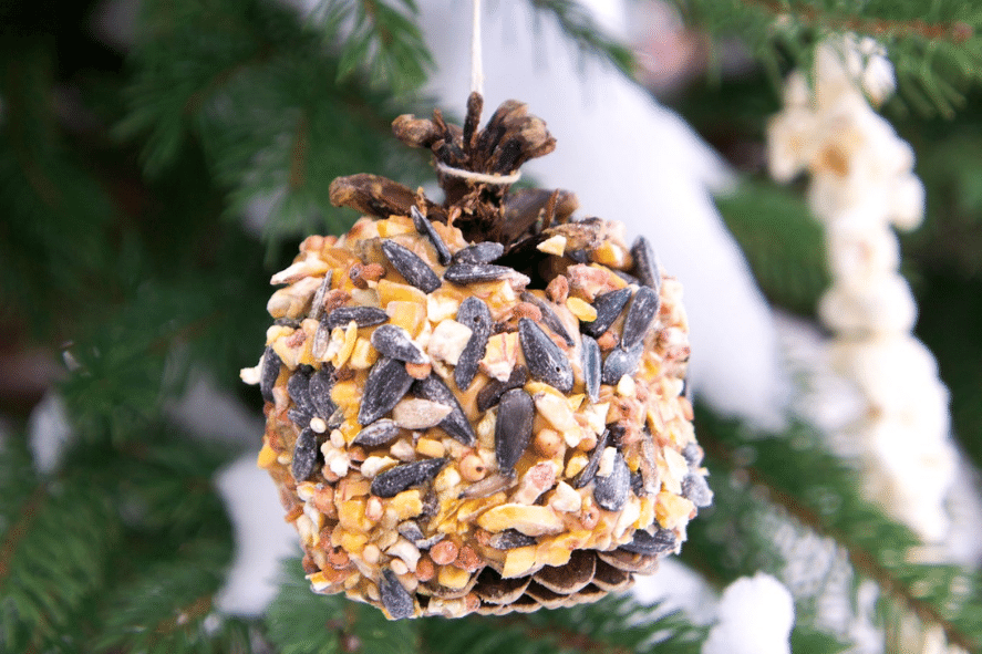pine cone covered with peanut butter and bird seed