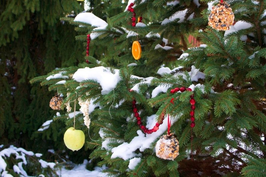 pine tree outside decorated with cranberries, oranges, and bird feeders