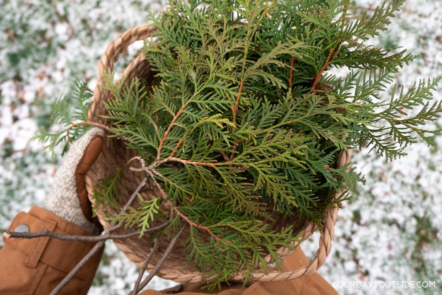 basket filled with cedar clippings to use for christmas decorations
