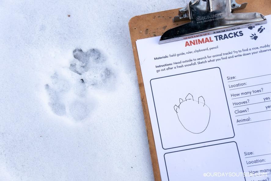 animal tracks in the snow next to printable