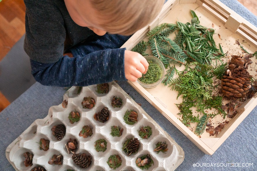 boy with a tray of pine needles and pine cones